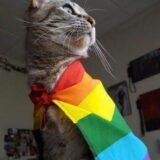 Amizade Namoro LGBTQIA+